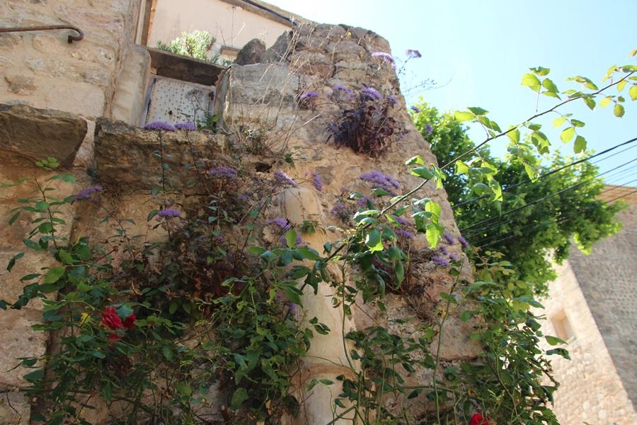 013.Mallorcas Westen.Valldemossa.IMG_8816 (37)