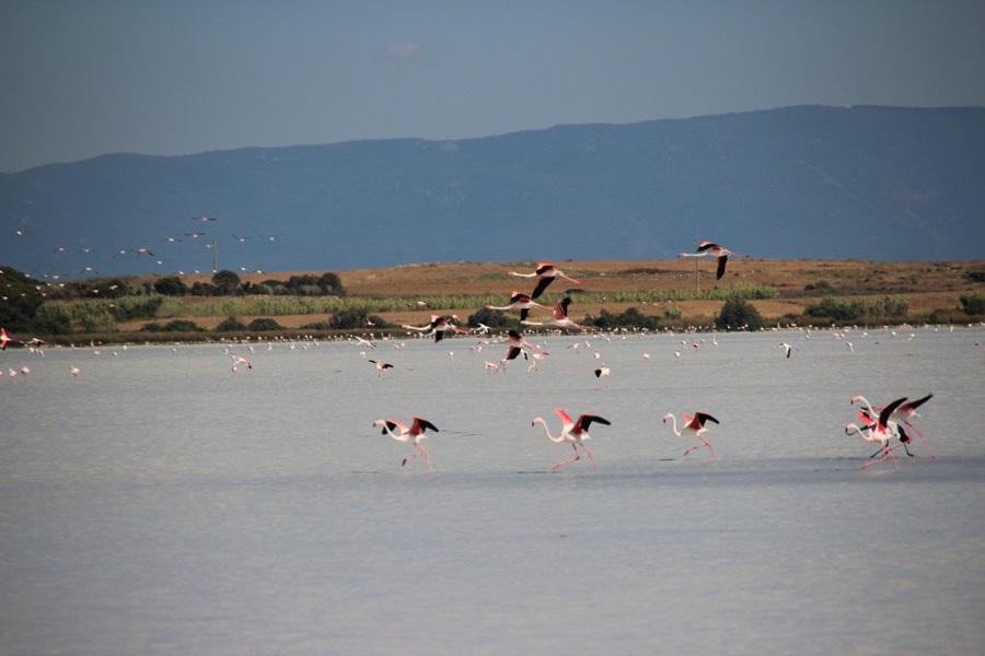 T2a007c.Flamingos bei Putzu I du.IMG_9002 (21)