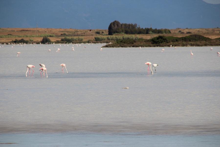 T2a007c.Flamingos bei Putzu I du.IMG_9002 (8)