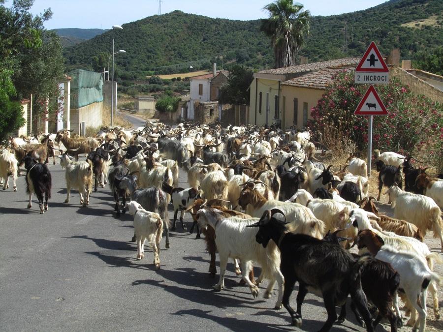 T2a008b.Unterwegs v.Càbras nach Porto di Teulada, Costa del SüdIMG_0071 (23)
