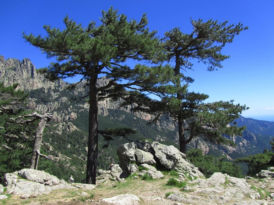 T2a011a.Col de Bavella Pass 1218 m hoch bei Solenzara.IMG_0106 (19)