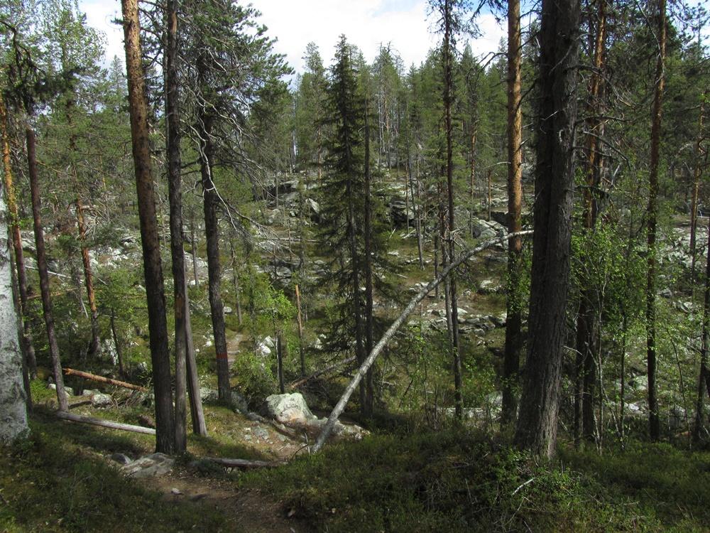 0032b.Muddus nationalpark,Wanderung.IMG_0003 (25)