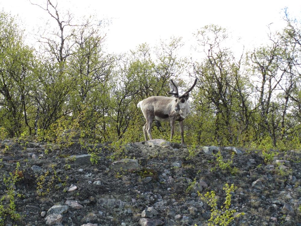 0033b.Uw. von Jukkasjärvi-Kiruna zum Abisko-Nationalpark.IMG_0021 (72) - Kopie