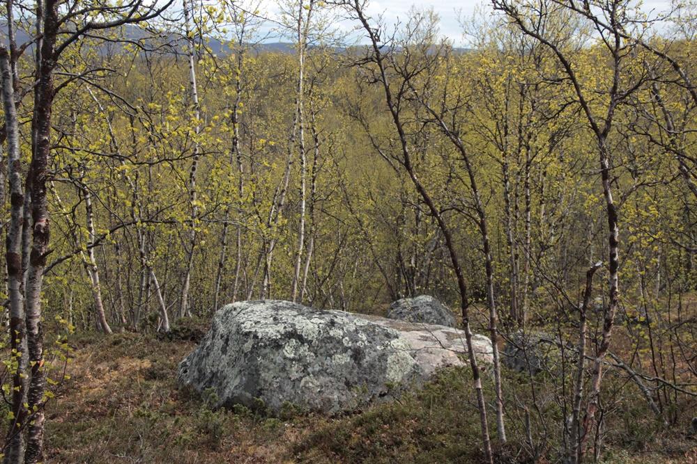 0033b.Uw. von Jukkasjärvi-Kiruna zum Abisko-Nationalpark.IMG_0889 (73) - Kopie