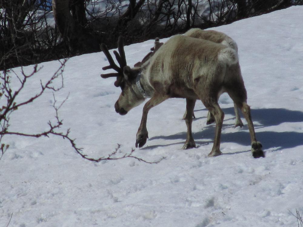 0034.Uw.vom Abisko nationalpark nach Riksgränsen Grenze zu  Norwegen..IMG_0026 (9)