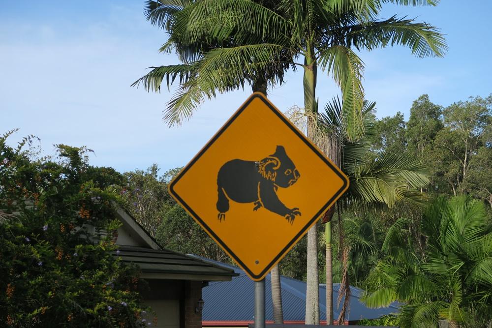 18A.Bonny Hills bei Port Macquarie.IMG_2608 (2)