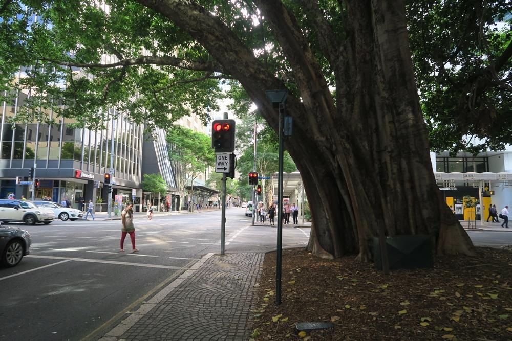 20A.Brisbane. IMG_2921 (76)