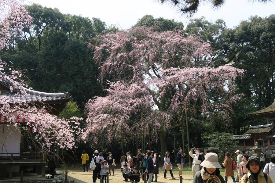 08.J.Kyoto,Daigoji-Tempel.IMG_5205 (44)