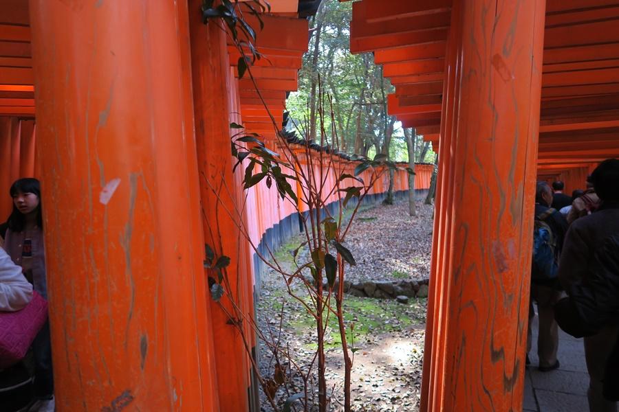 08.J.Kyoto,Oinari-san Tempel u.1001 Tore.IMG_5096 (19)