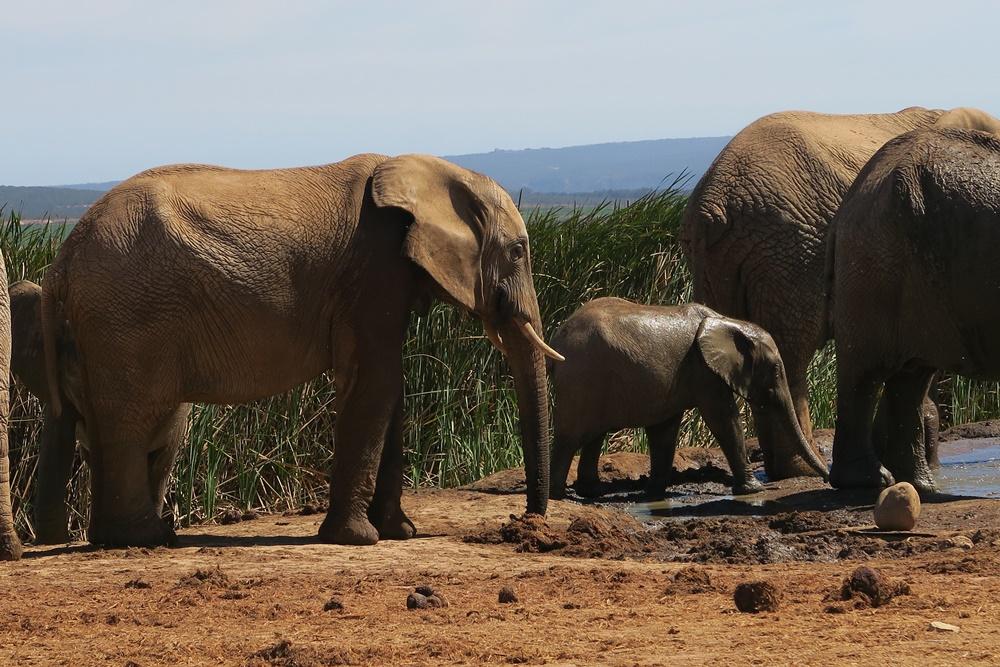 Addo Elephant Nationalpark IMG_7181 (14)