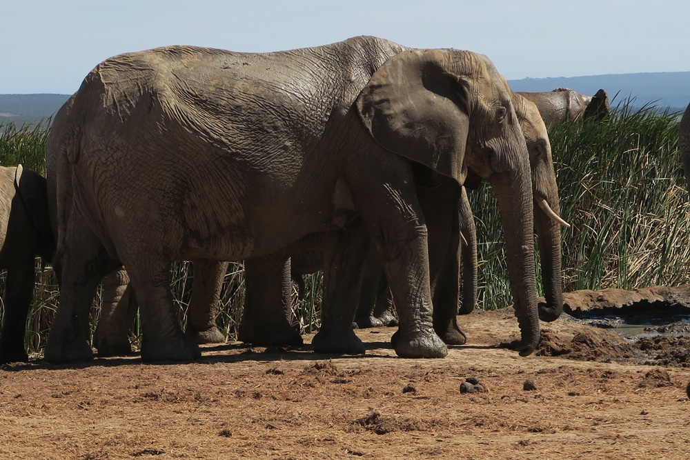 Addo Elephant Nationalpark IMG_7181 (15)