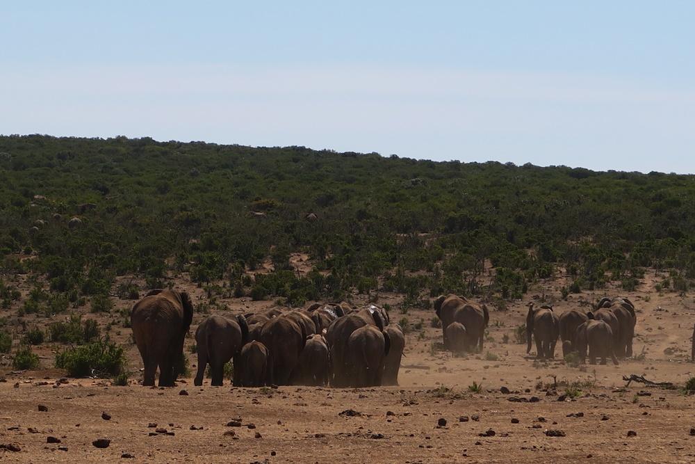 Addo Elephant Nationalpark IMG_7181 (16)