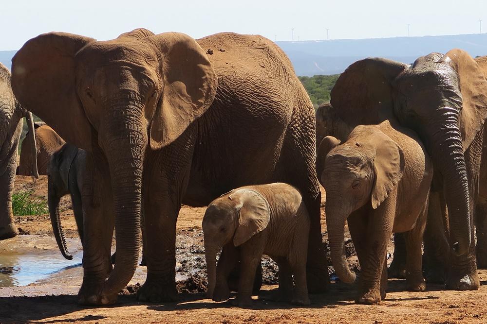 Addo Elephant Nationalpark IMG_7181 (17)