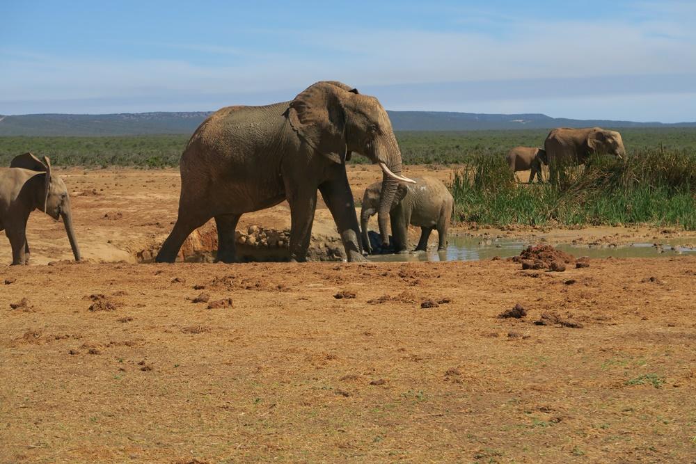 Addo Elephant Nationalpark IMG_7181 (18)