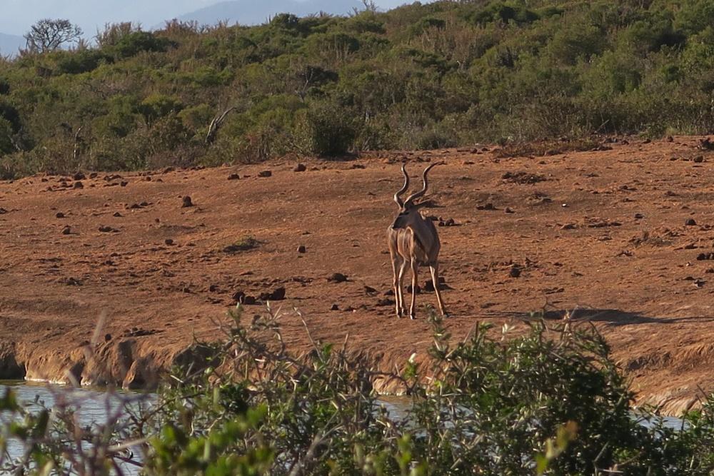 Addo Elephant Nationalpark IMG_7181 (23)