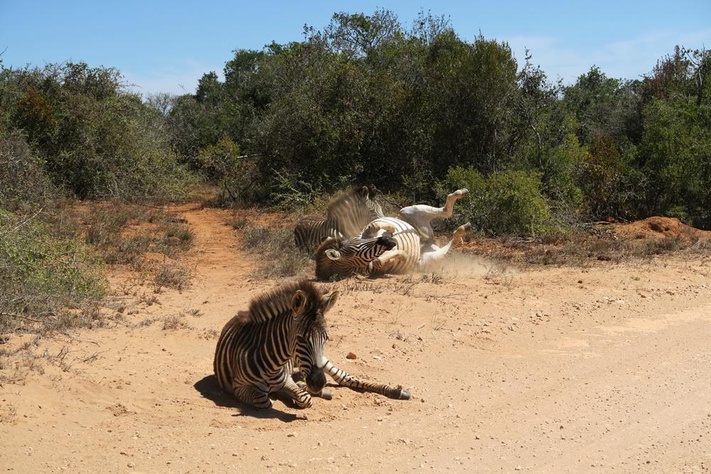 Addo Elephant Nationalpark IMG_7181 (7)