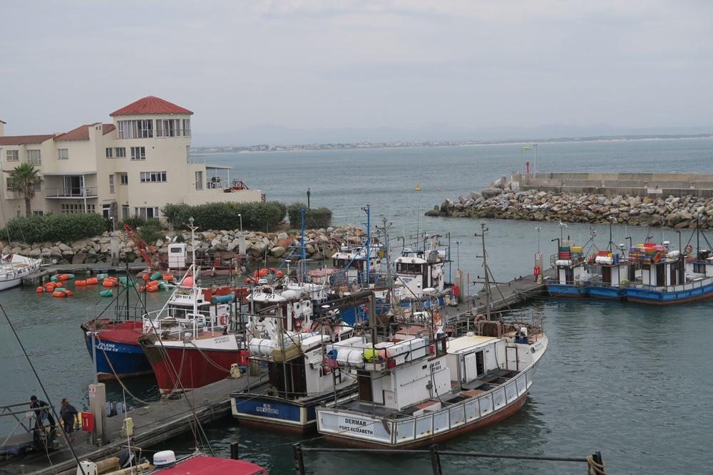 5.Cap St.Francis Bay, 2.Tag mit Wanderung IMG_7355 (2)