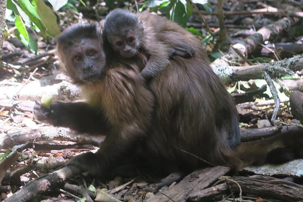 8. Monkeyland IMG_7552 (49)