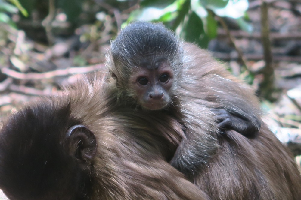 8. Monkeyland IMG_7552 (50)