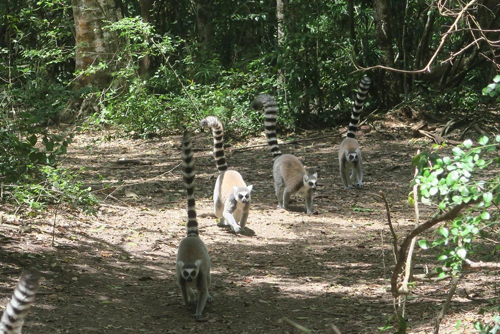 8. Monkeyland IMG_7552 (57)