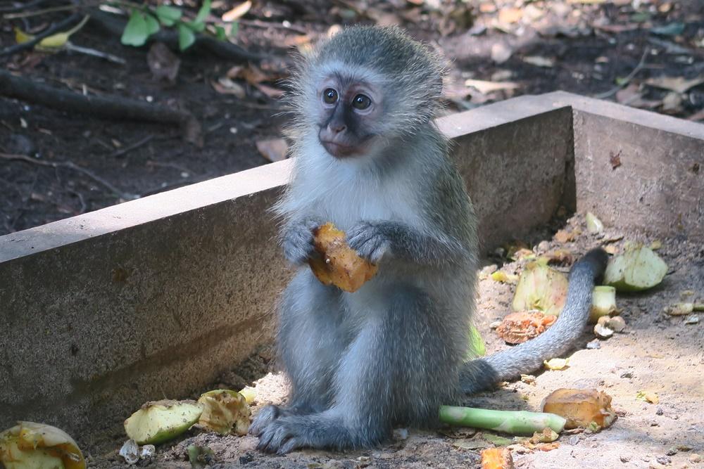 8. Monkeyland IMG_7552 (87)