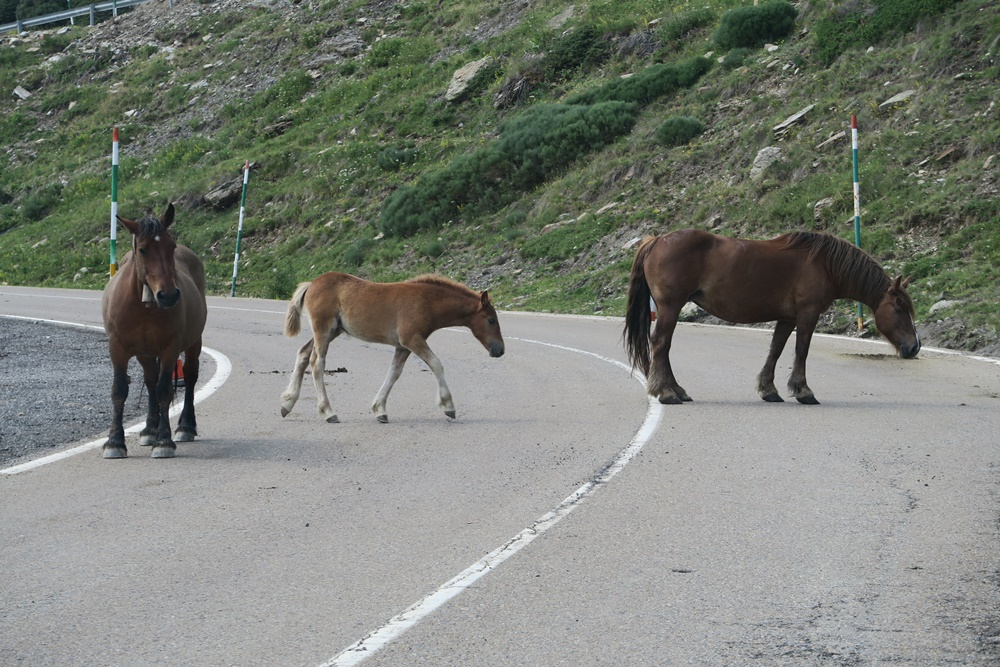 00.Von Espot nach Vielha in Spanien IMG_0622 (34)