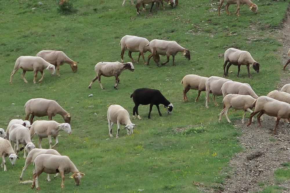04... 09.07.17 Unterwegs von Andorra nach Espot im NP IMG_0512 (6)