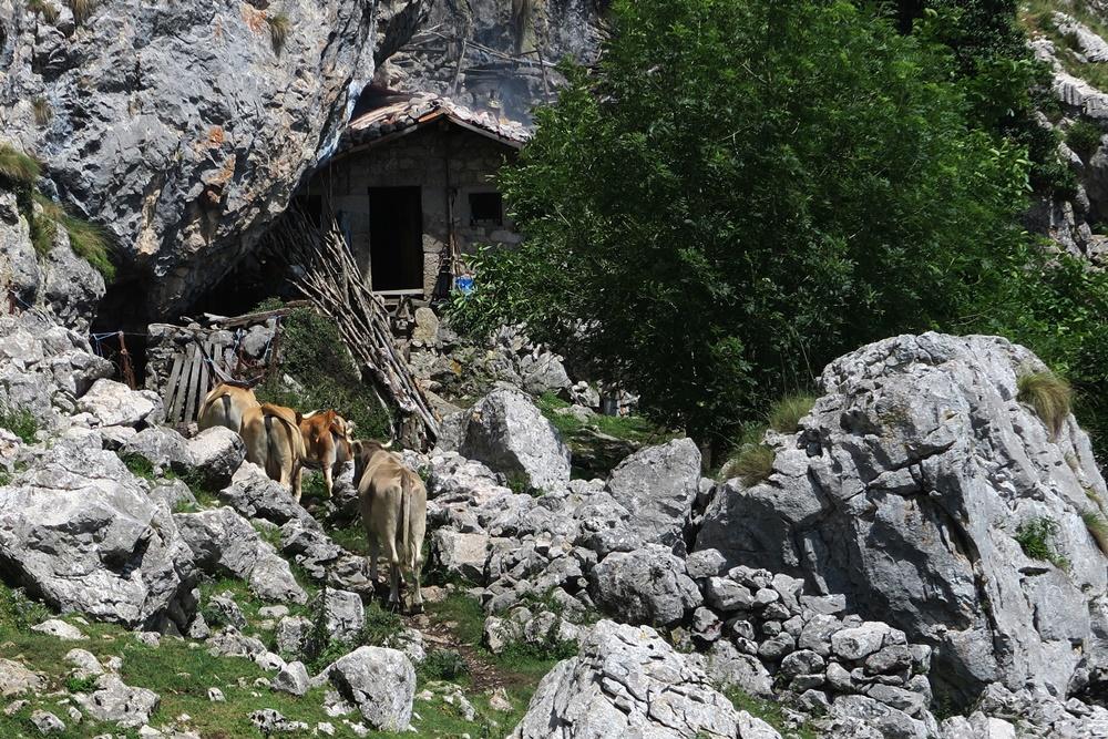 08..21.07.17 Wanderung, Lagos de Covadonga IMG_1257 (36)