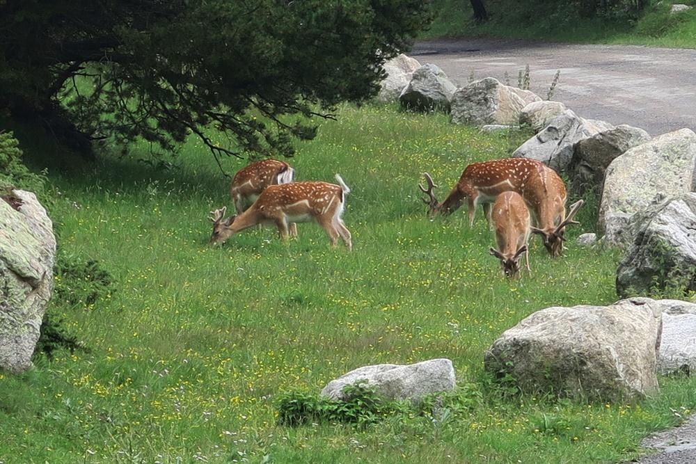 10...10.07.17 Espot im Parc National dÀigüestortes Wanderung IMG_0544 (82)